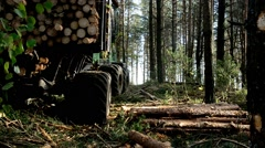 Gathering loading timber on logging truck. The harvester working in a forest. Stock Footage
