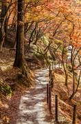 Walkway with Colorful Autumn Leaf - stock photo