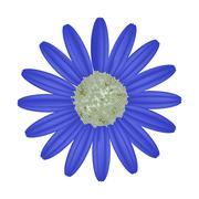 Blue Daisy Flower on A White Background - stock illustration