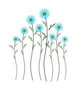 Light Blue Daisy Blossoms on White Background - stock illustration
