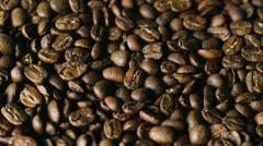 Coffee beans Nicaragua Maragogype - stock footage