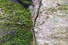 Natural fractured stone and moss in forest. Stock Photos