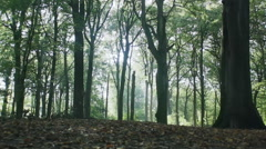 Autumn Forest Sunshine Through Trees - 29,97FPS NTSC Stock Footage