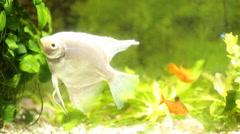 fish in an aquarium - stock footage