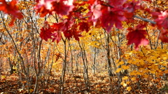 Colors of Autumn - stock footage
