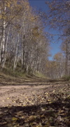 Recreation 4x4 RZR drives mountain dirt trail road autumn vertical HD - stock footage