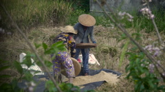 Two women rice farmers hand sifting rice in a field in Bali Stock Footage