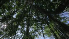 360 degree view of the tropical forest canopy in the jungle of Ubud, Bali Stock Footage