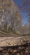 Autumn mountain dirt trail road nature landscape vertical HD - stock footage