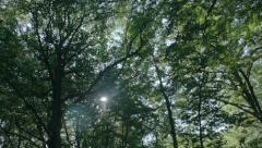 Lens Flare Tree Mushrooms Forest Background - 29,97FPS NTSC Stock Footage