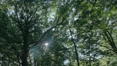 Lens Flare Tree Mushrooms Forest Background - 25FPS PAL Stock Footage