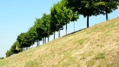 View of the trees in the line in the countryside - grassland Stock Footage