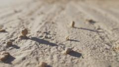 Macro of  someone going alone in the desert. Stock Footage