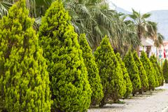 Avenue of cypresses Stock Photos