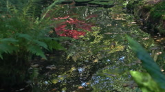 Reflection in Pond of Autum Colors in Japanese Park - 29,97FPS NTSC Stock Footage