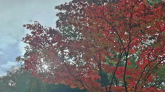 Sun Lens Flare Red Maple Leaf Autumn Park - 25FPS PAL Stock Footage
