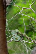 Poisonous Green snake sitting on a branch Stock Photos