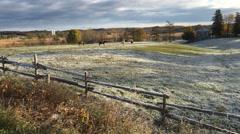 4K UltraHD Horses in a field on a frosty morning Stock Footage