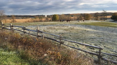 4K UltraHD Pan of horses in a field on a frosty morning Stock Footage