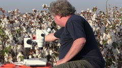 A scientist with microscope finds insects in cotton wool sample Stock Footage
