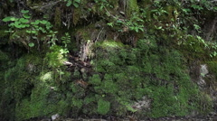 Pan shot of Moss in the rock Stock Footage