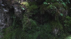 Moss in the rock Stock Footage
