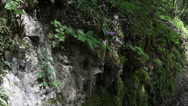 Stock Video Footage of Pan shot of Moss in the rock and road aside.