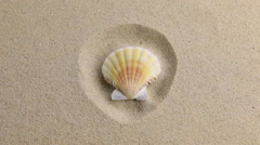 Approximation of sea shell  lying on the sand Stock Footage