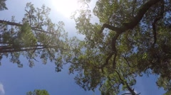 Jekyll Island Vehicle Footage - stock footage