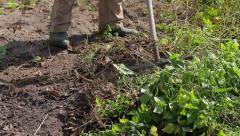 Farmer cleans a vegetable garden. Stock Footage