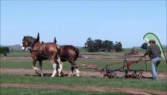 Plowing with horses. Stock Footage