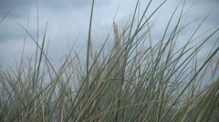 Marram grass dancing in wind, slow motion - stock footage