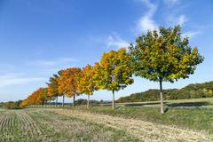 Tree alley in indian summer colors Stock Photos