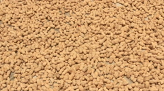 Collecting peanut after drying Stock Footage
