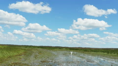 Stock Video Footage of Airboat Ride in Wetland with White Crane Flying Away in Slow Motion