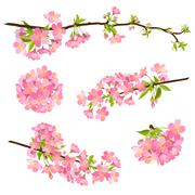 Beautiful Vector Cherry Blossom Branches - Japanese Sakura Flower Piirros