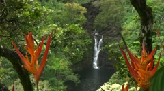 Heliconia at lower puahokamoa falls Stock Footage