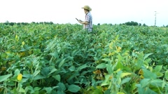 Rancher with tablet analyze soybean field  - stock footage
