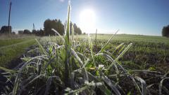 First white frost on farmland grass in autumn and sun. Timelapse 4K Stock Footage