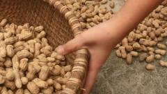 Collecting harvested peanuts after drying Stock Footage