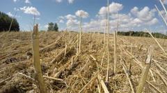 Field of harvested oilseed rape with stubble, timelapse 4K Stock Footage