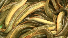 Dying eels out of the water Stock Footage