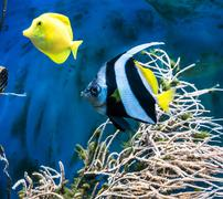tropical blue fish and clownfish - stock photo