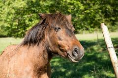 thoroughbred horse on farm side view - stock photo
