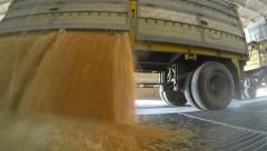 Unloading Corn Grain into a Silo Stock Footage