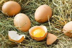 Fresh eggs in grass - stock photo
