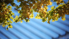 Autumn leaves on the background of the football bleachers - stock footage