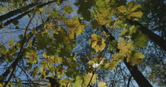 View on tree tops from the ground. crones Stock Footage