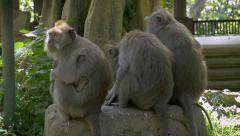 A group of monkeys sitting on a rock with their backs to the camera Stock Footage