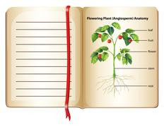 Flowering plant anatomy on page Stock Illustration